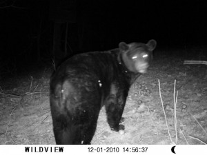 bearcam