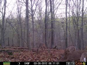 deer cam 2
