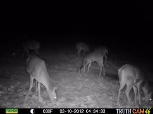 deer in dark2